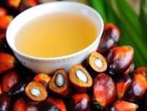 Правительство РФ рассмотрит запрет на ввоз пальмового масла в РФ - Обзор прессы - TKS.RU