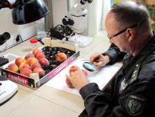 Россия может ограничить ввоз фруктов из Сербии