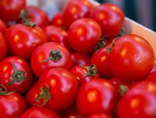 В Усть-Лабинске уничтожены зараженные и запрещенные к ввозу в РФ томаты - Криминал
