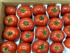 Турция возобновила поставки томатов в Россию - Обзор прессы