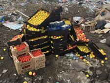 Ярославская таможня: выявлено и уничтожено 1800 килограмм  санкционных продуктов