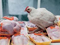 Россия может повысить ставки пошлин на ввоз мяса птицы и свинины до 65-85%  - Новости таможни - TKS.RU