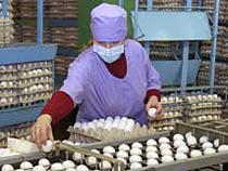 Правительство РФ продлило действие нулевых пошлин на импорт домашних кур и яиц - Новости таможни - TKS.RU
