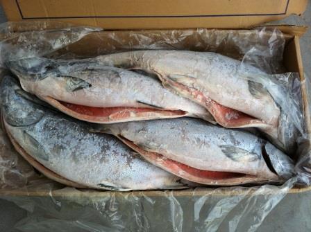 Незаконный экспорт рыбопродукции на 300 миллионов рублей выявила Сахалинская таможня