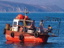 Мурманской таможней арестованы 3 морских маломерных судна, занимавшихся контрабандой морских биоресурсов - Кримимнал - TKS.RU