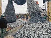 Японская компания намерена установить во Владивостоке современное оборудование для хранения рыбы