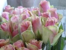 В срезах цветов розы из Кении выявлен карантинный объект - Кримимнал - TKS.RU
