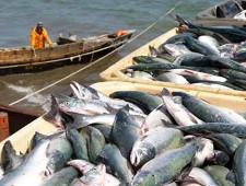 Рыба идет на экспорт, а компании – за рейтингами - Обзор прессы - TKS.RU