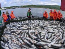 ДВТГ и южнокорейская провинция Кенгидо совместно займутся рыбой - Логистика - TKS.RU