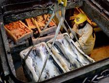 Грузооборот Мурманского морского рыбного порта за 8 месяцев 2017 г. увеличился на 21% - Логистика - TKS.RU