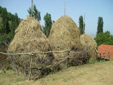 Япония заинтересована в импорте сена из Приморья - Обзор прессы