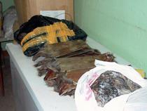 142 шкуры ондатры на двоих - Кримимнал - TKS.RU