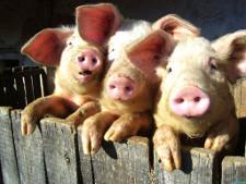 ВТО отклонила апелляцию России по делу о запрете на импорт свинины из ЕС