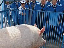 Россия ужесточает таможенный контроль и ограничивает импорт свинины - Новости таможни - TKS.RU