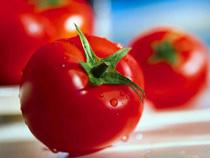 В Анкаре не связывают темы импорта из России мяса и экспорт томатов