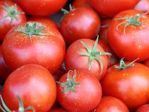 Ткачев пообещал не открывать российский рынок томатов для поставок из-за рубежа - Обзор прессы