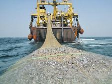 Пойманную за пределами внутренних морских вод рыбу привезут в Россию