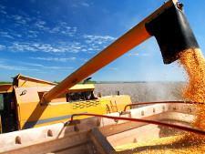 Новые условия поставок зерна в Турцию крайне невыгодны для России - Новости таможни - TKS.RU