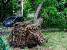 Из-за урагана в Москве погибли шесть человек, более 40 пострадали