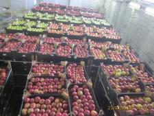 Казахстан заподозрили в реэкспорте польских яблок - Новости таможни