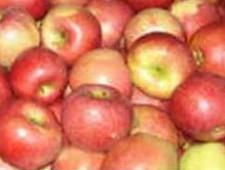 600 килограмм санкционных яблок уничтожено в Курганской области - Криминал