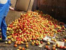 В Саратовской области уничтожены польские яблоки
