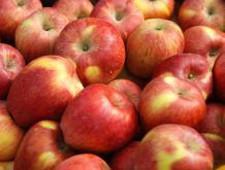 Россельхознадзор обсудил с Новой Зеландией возможные поставки яблок в РФ - Новости таможни - TKS.RU