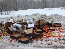 Более тонны польских яблок уничтожили на полигоне