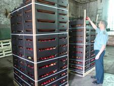 На саратовском рынке обнаружены яблоки неизвестного происхождения - Кримимнал - TKS.RU