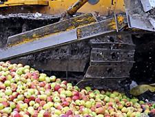 18 тонн польских яблок раздавили на Смоленщине - Кримимнал - TKS.RU