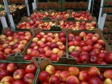 59 тонн польских яблок задержаны на границе с Белоруссией