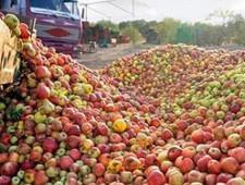 За полгода пермяки лишились четырех тонн польских яблок - Кримимнал - TKS.RU
