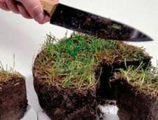 Чиновники предложили изымать у граждан землю за нескошенную траву и мусор