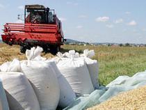 Таможенники смутили зерновой рынок - Новости таможни - TKS.RU