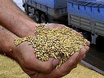 На границе с Казахстаном задержали почти 40 тонн зерна - Криминал