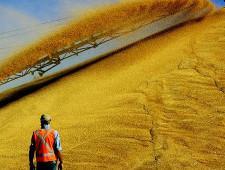 Александр Ткачев: Россия заинтересована в организации поставок зерна и рыбной продукции в Бразилию
