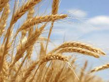 Экспорт - импорт зерна и продуктов его переработки - Новости таможни