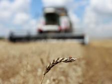 Ткачев отвел до пяти месяцев на замену Турции другими странами для экспорта зерна