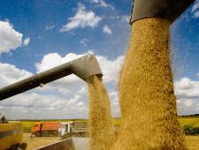 Зерновой союз РФ: экспортеры не сообщали о новых проблемах с экспортом зерна в Турцию