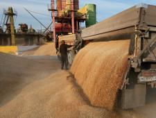 Россия намерена начать поставлять пшеницу в Венесуэлу