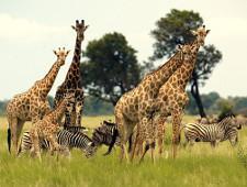 В Африку без визы: что российским туристам нужно знать о ЮАР - Практикум - TKS.RU