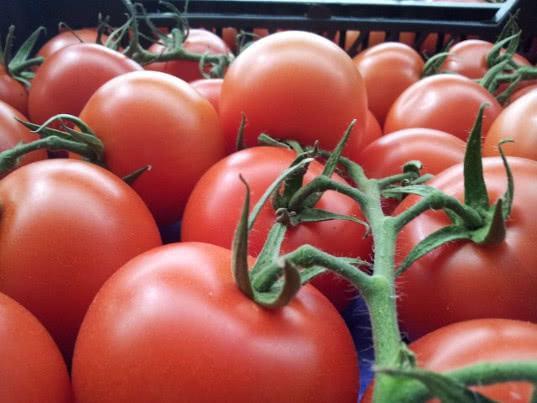 250 грузовиков с турецкими помидорами не могут въехать в Россию с Украины - Новости таможни